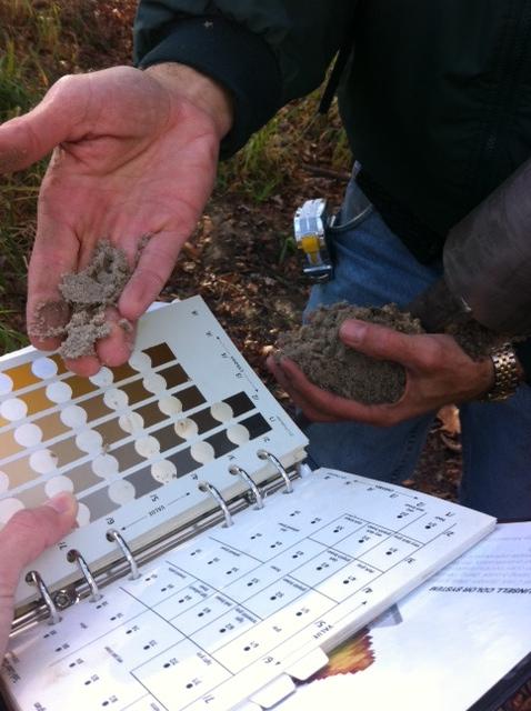 Piedmont Hydric Soils