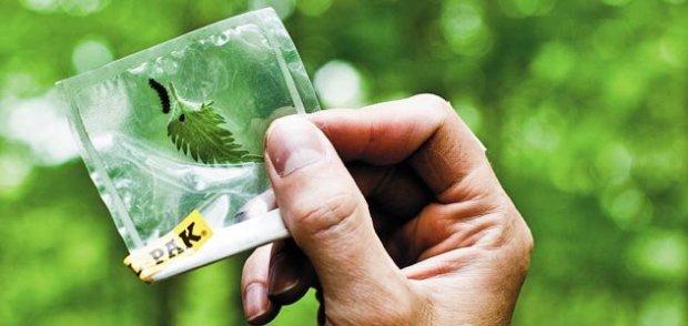 Dave-Erickson-barcode-plant-species-Plummers-Island-631.jpg__800x600_q85_crop