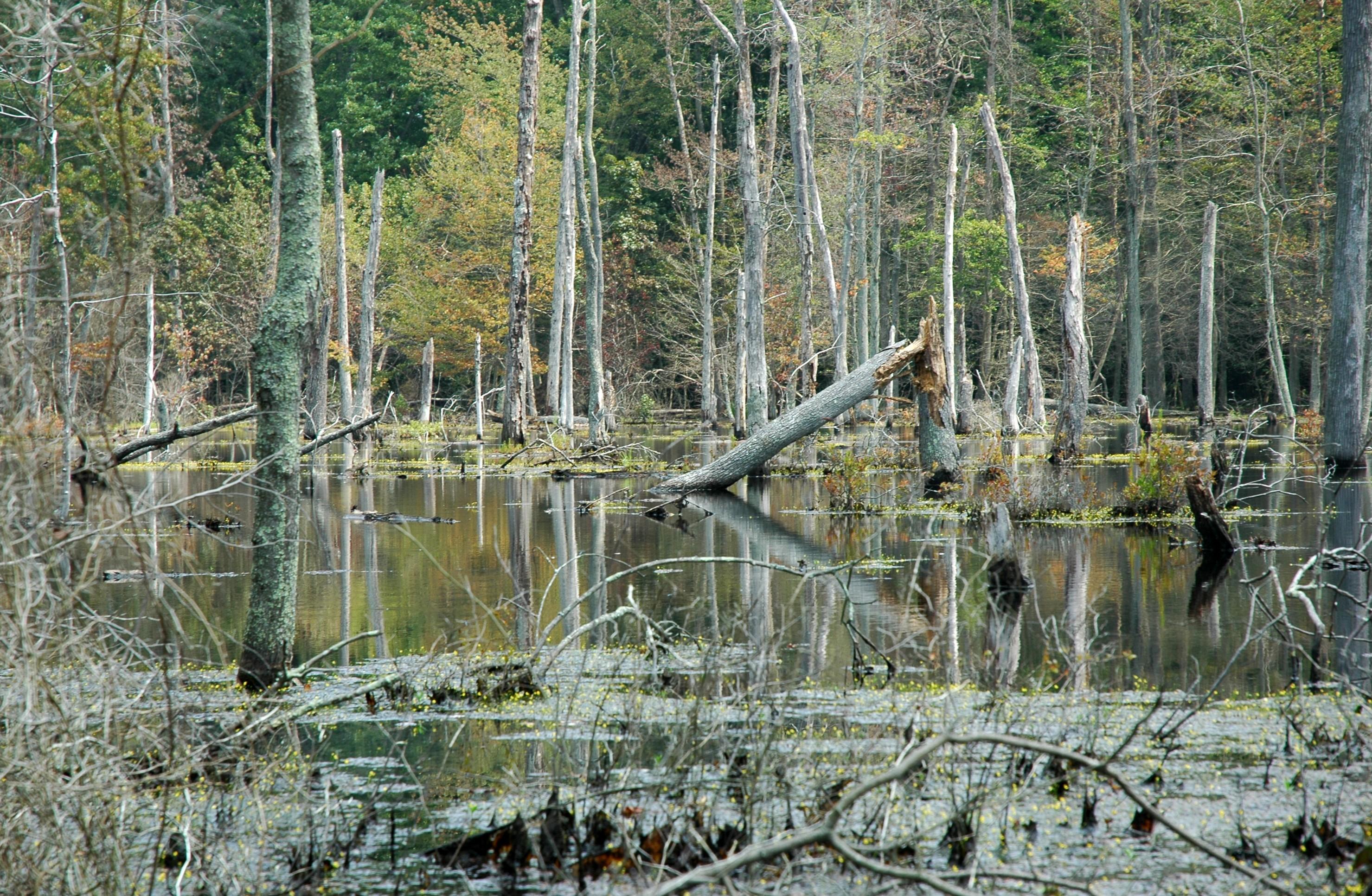 Fishing Was Cold Botany Was Hot The Natural History Log