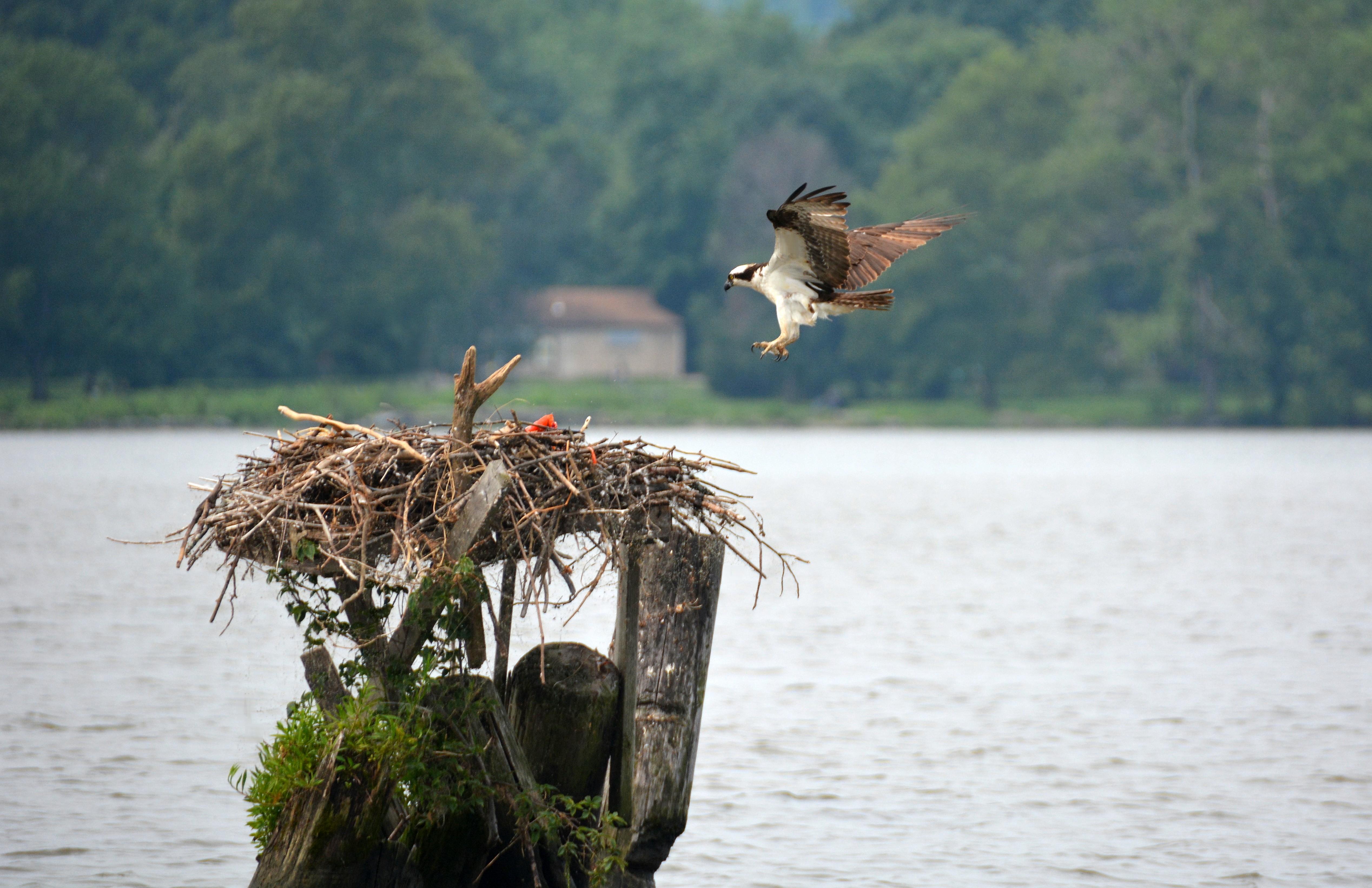 Potomac Fishing | The Natural History Log