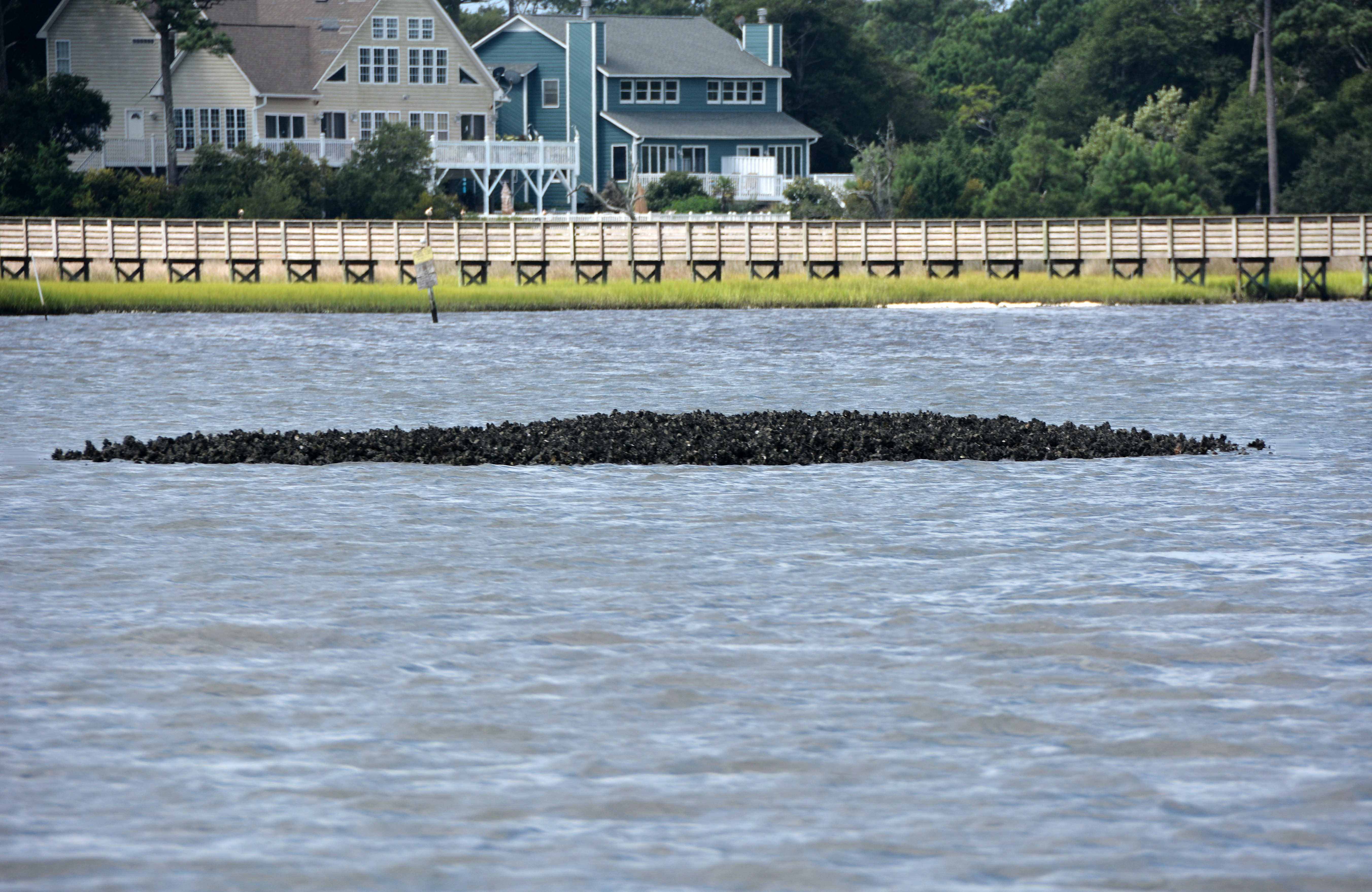 Bouge sound intra coastal waterway the natural history log dsc5699 publicscrutiny Images